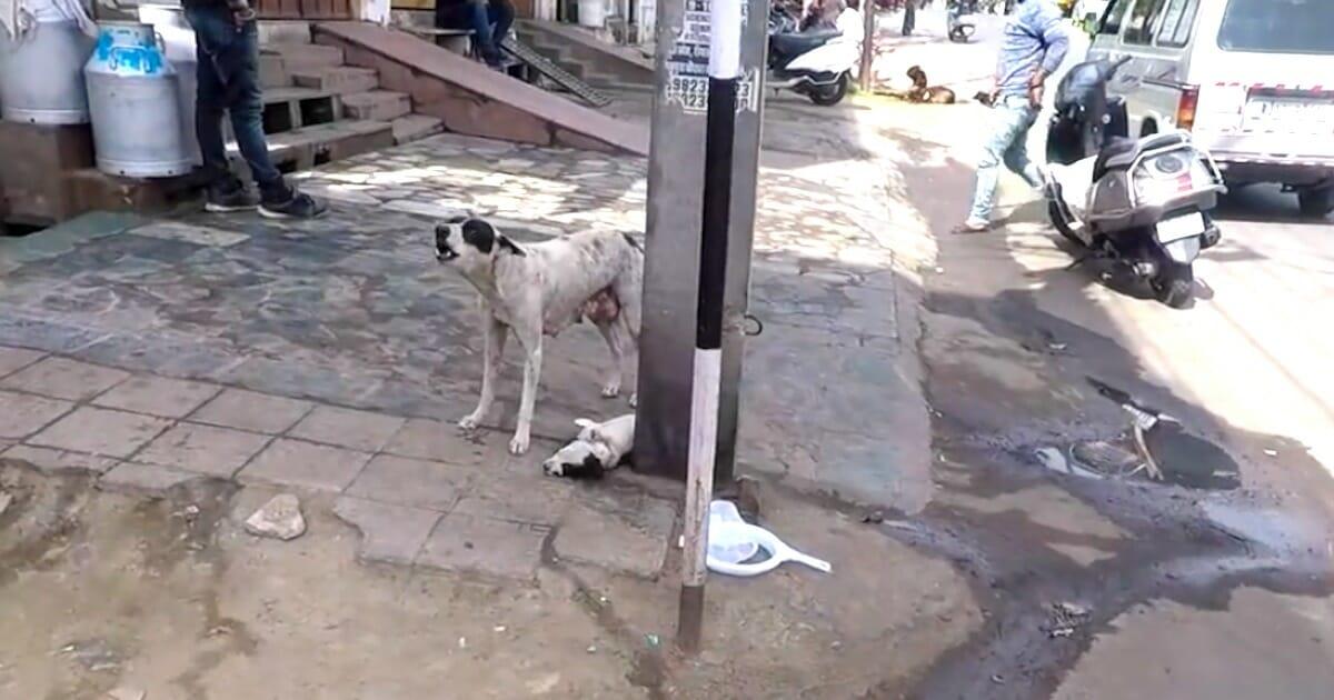 Psia mama i jej szczeniak