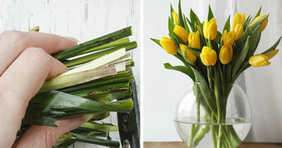 Grafika przedstawia dwa zdjęcia, po lewej łodygi tulipanów, po prawej wazon z tulipanami