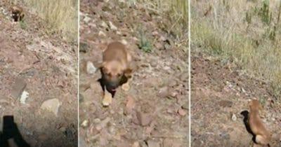 Mężczyzna znalazł porzuconego szczeniaka w upalny dzień - zdał sobie sprawę z powagi sytuacji, gdy zobaczył co kryje się za nim