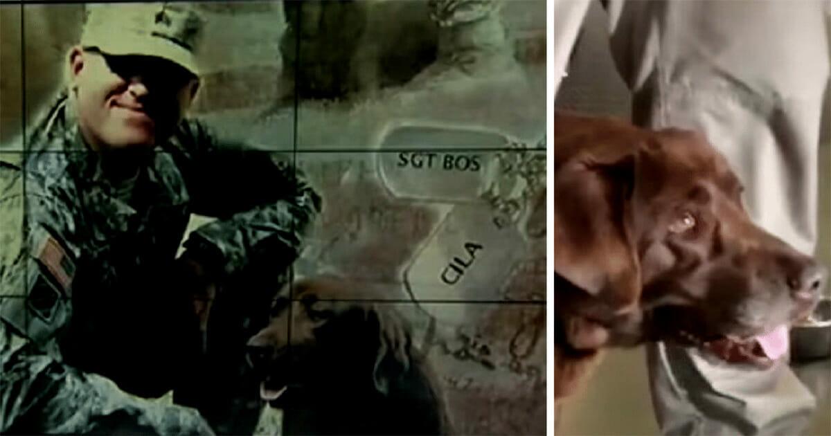 Grafika przedstawia dwa zdjęcia: po lewej sierżant Bos i Cila podczas misji w Iraku; po prawej Cila dziś
