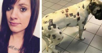 Sądziła, że jej pies został mocno pogryziony - weterynarz po oględzinach natychmiast zadzwonił na policję