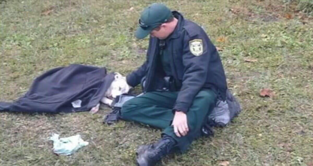 Policjant siedzi przy rannej suczce, którą okrył swoją kurtką
