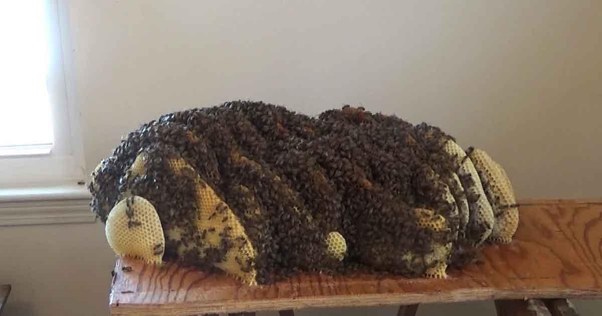 gniazdo pszczół