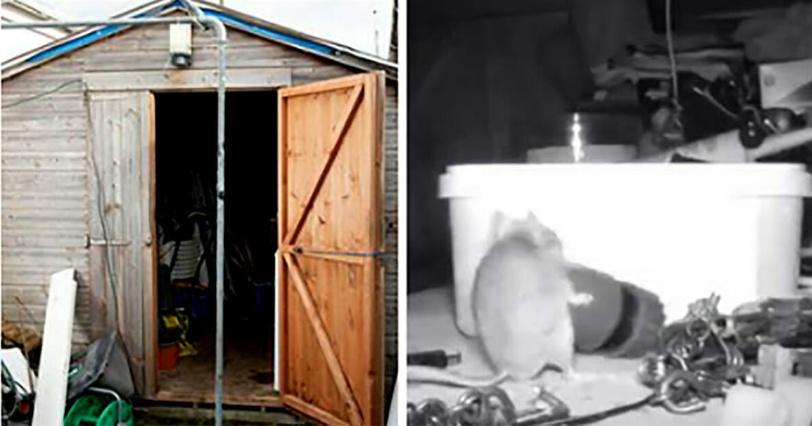 Grafika przedstawia dwa zdjęcia: po lewej szopa, po prawej kadr z nagrania, a na nim mysz robiąca porządek