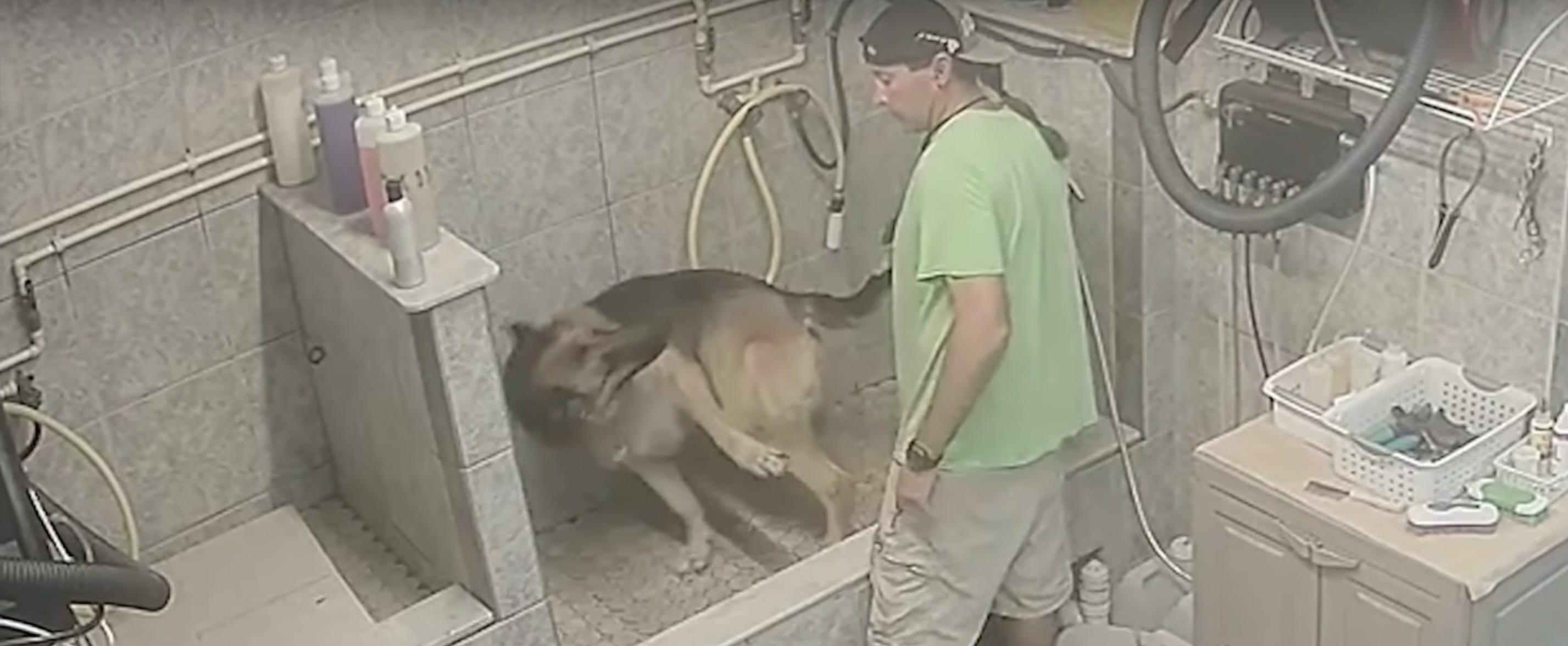 Owczarek niemiecki TT podczas wizyty u psiego fryzjera