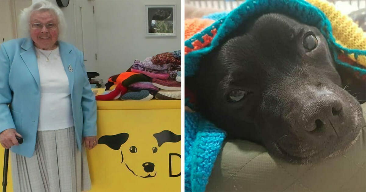 Grafka przedstawa dwa zdjęcia: po lewej starsza pani, która robi kocyki dla psów, po prawej pies owinięty w jeden z takich kocyków