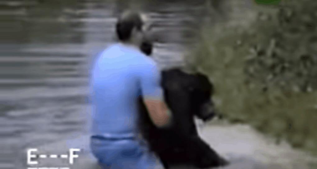 Rick wyciąga szympansa z wody