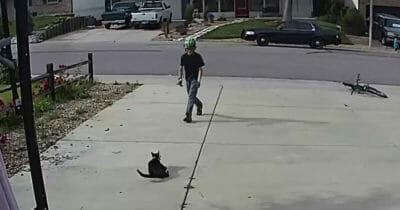 Chłopak podchodzi do jednookiego kota, aby się z nim pobawić