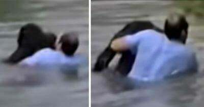 Grafika przedstawia dwa zdjęcia, na których mężczyzna wyławia z wody szympansa