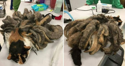 Grafika przedstawia dwa zdjęcia: na obu kot Hidey przed zabiegiem usuwania sierści