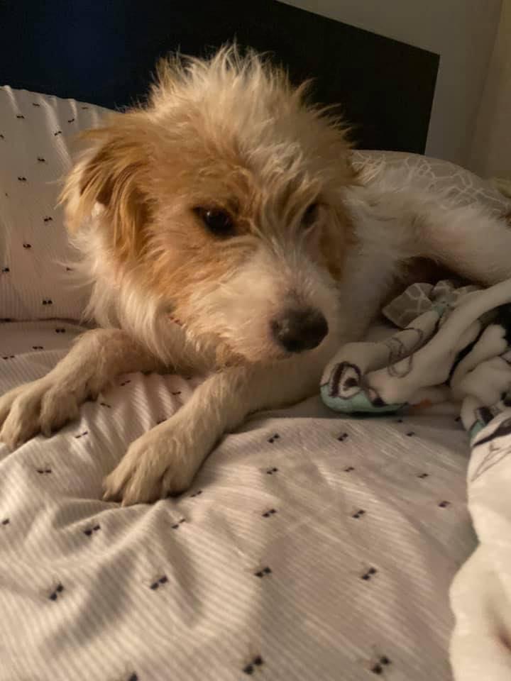 Pies Chance leży na łóżku