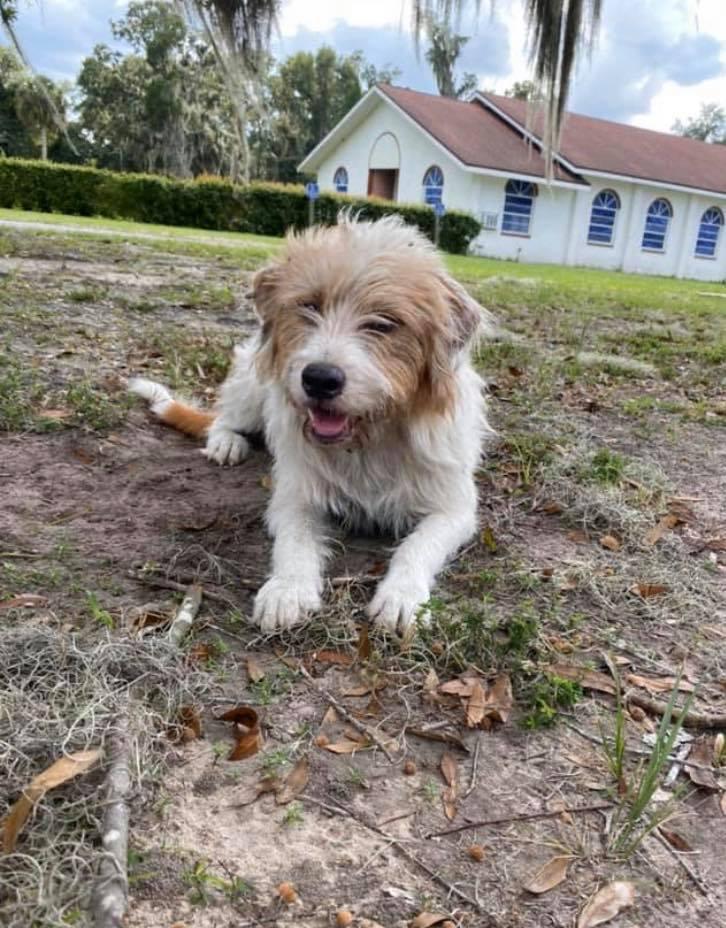 Pies Chance leży na trawniku