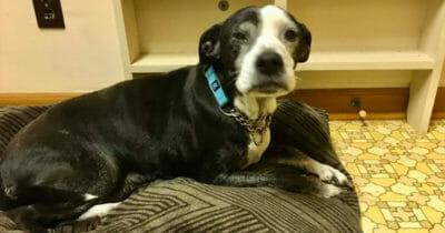 Dziadek prosi weterynarza o uśpienie psa, ponieważ już go nie chce