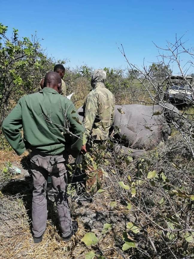 ludzie stojący przy martwym słoniu