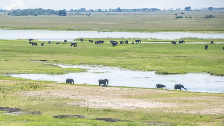 słonie na równinie przy wodopoju