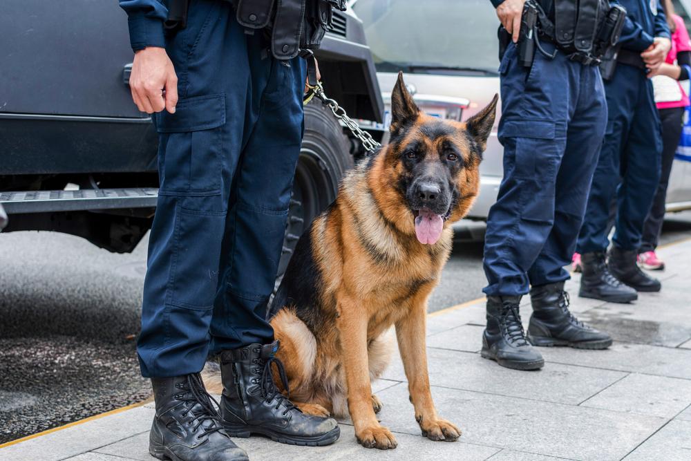 siedzący pies przy nogach policjanta