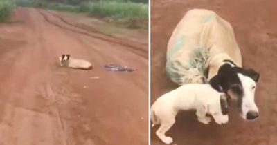 Psia mama znaleziona w worku na opuszczonej drodze, kiedy weterynarz przyjrzał się bliżej, odkrył mroczną prawdę