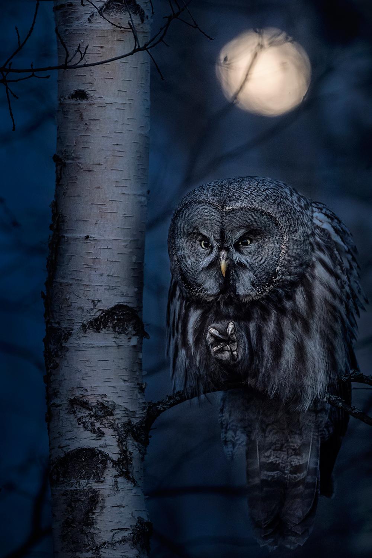 sowa nocą