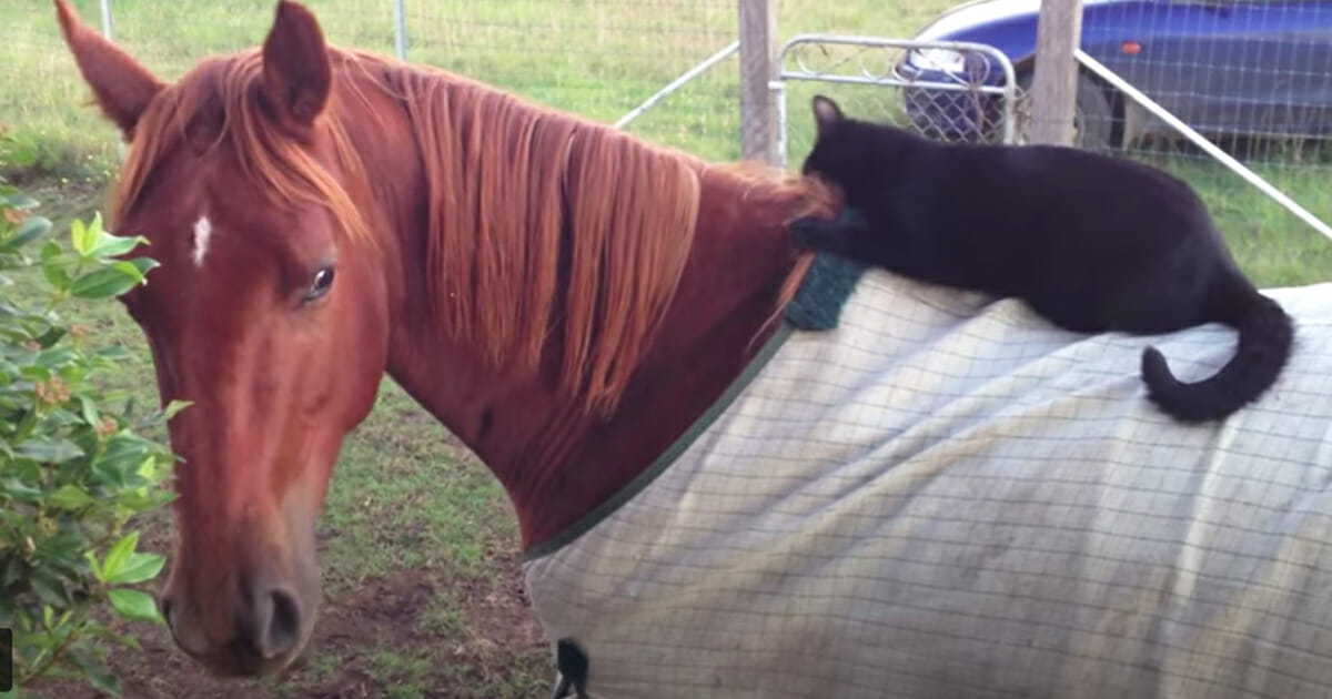 Czy na bujanym koniu można schudnąć