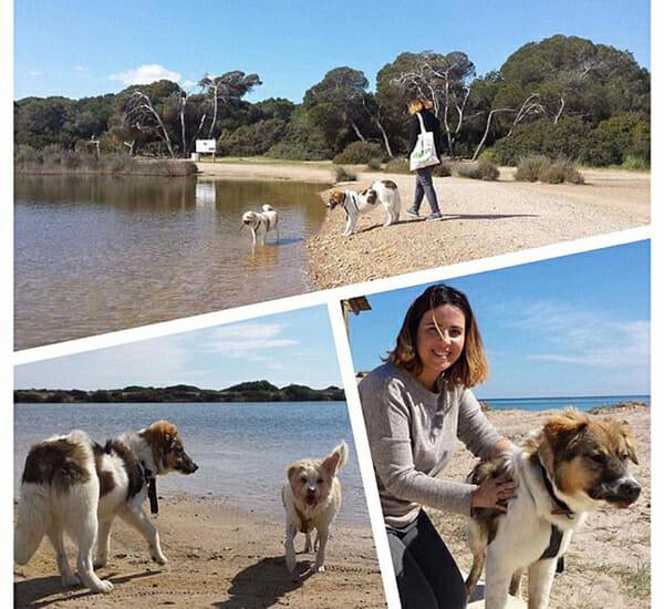 kobieta na plaży za dwoma psami