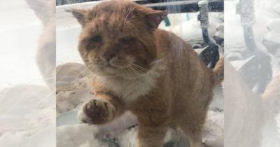 Zmarznięty kot drapie w drzwi i prosi o pomoc - po kilku godzinach weterynarz dostrzega, co kryje się w jego sierści