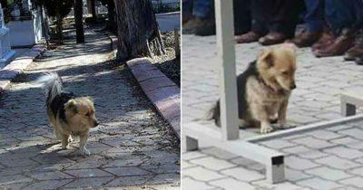 Pies ucieka codziennie z domu po śmierci właściciela - wtedy syn podąża za nim i odkrywa rozdzierającą serce prawdę