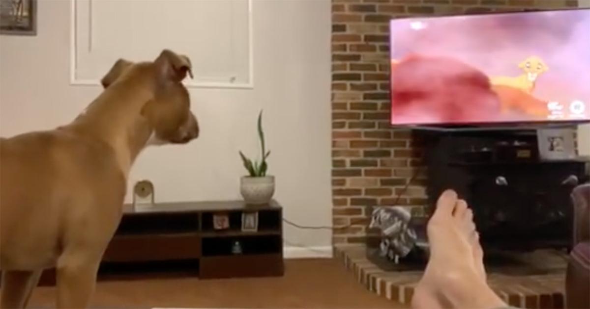 il cane guarda la tv