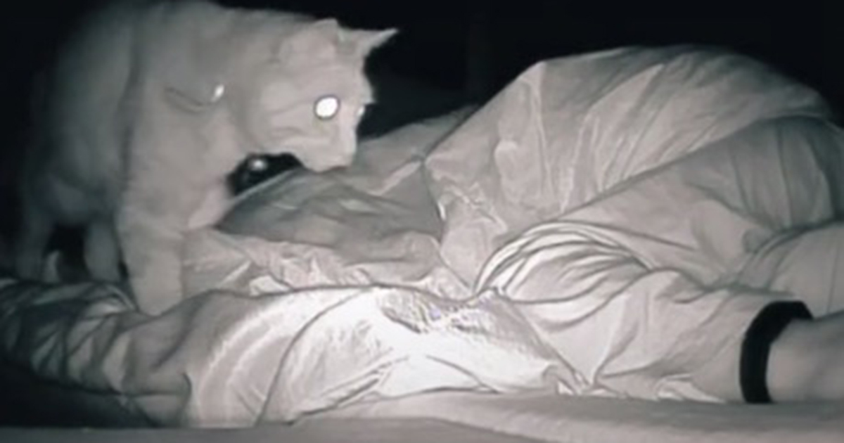 kot w nocy na łóżku