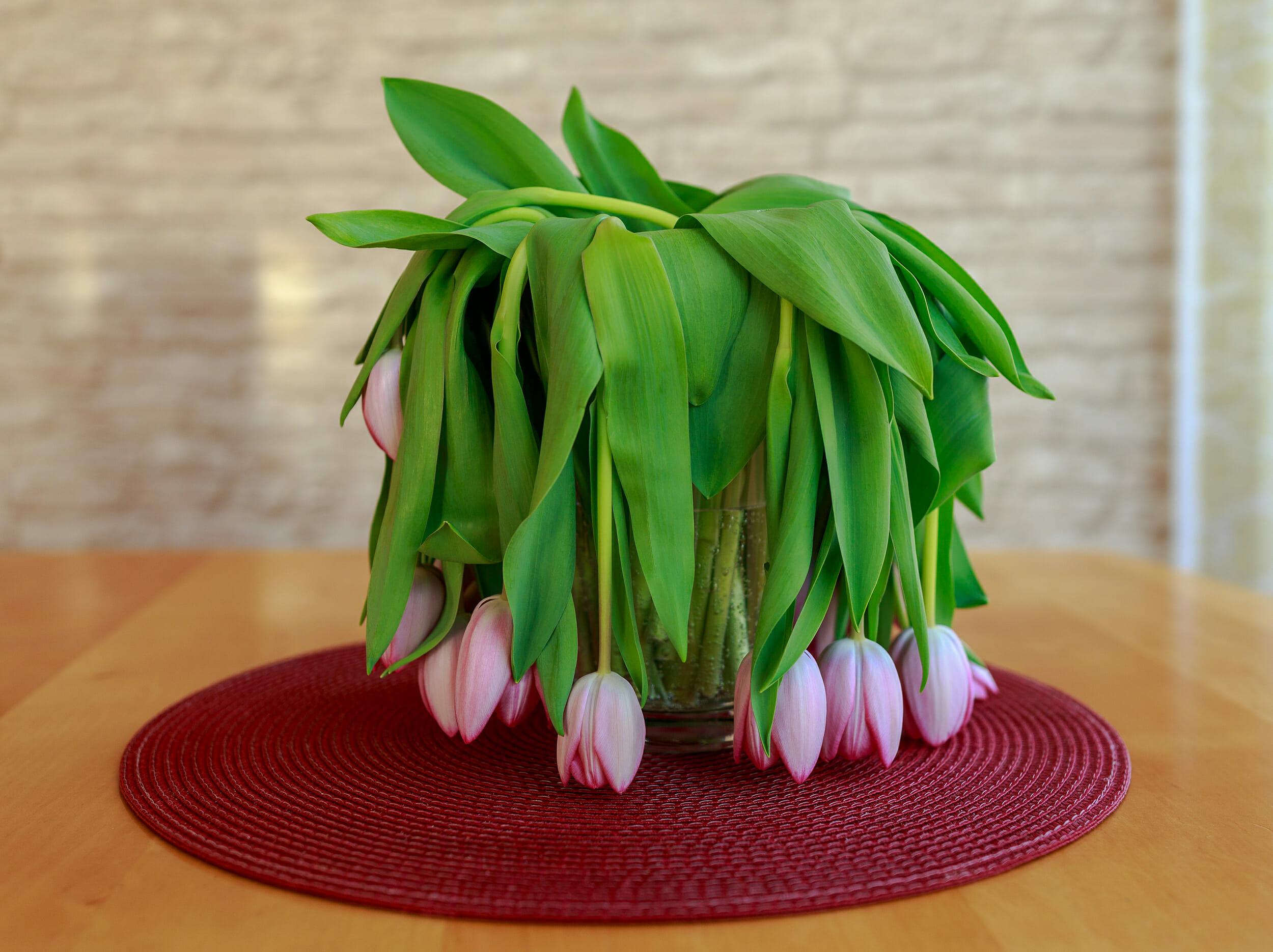 oklapnięte różowe tulipany