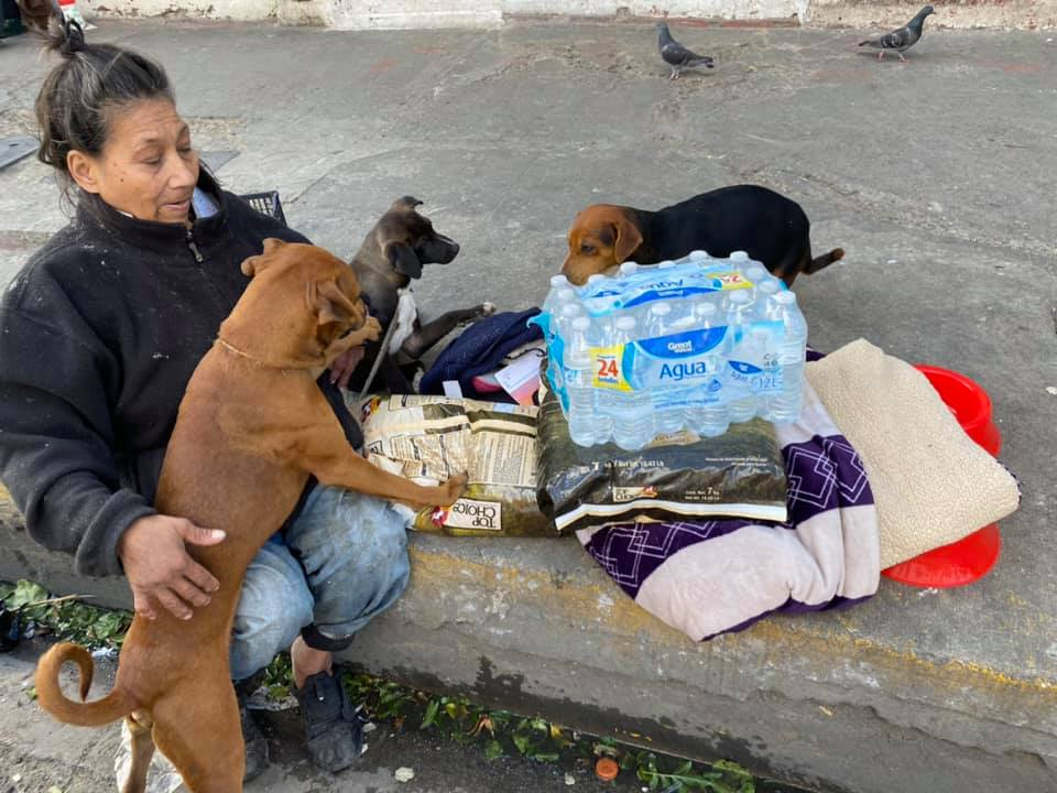 kobieta i trzy psy