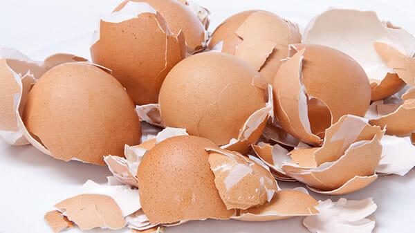 skorupki jajka