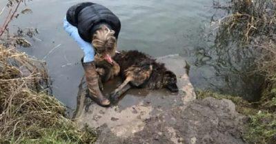 Psa Bellę skazano na śmierć - rok później miłośnicy zwierząt są zachwyceni dowiadując się, gdzie trafiła