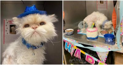 Schronisko organizuje 19 urodziny dla kota w podeszłym wieku, aby pomóc mu znaleźć dom