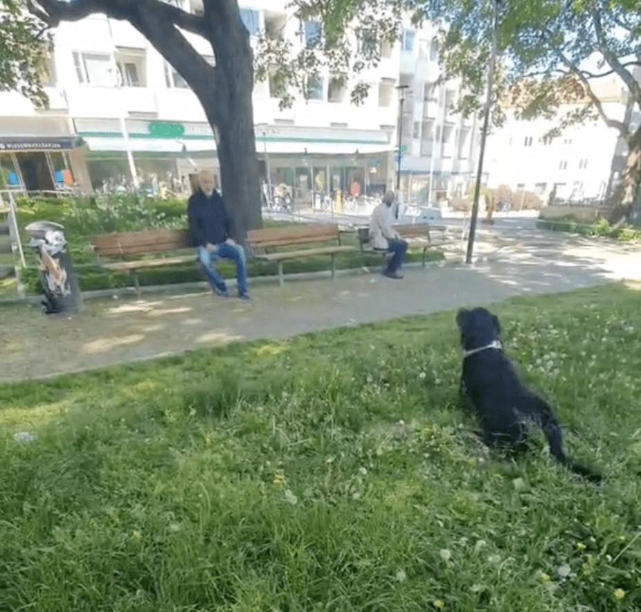 pies na trawniku w parku