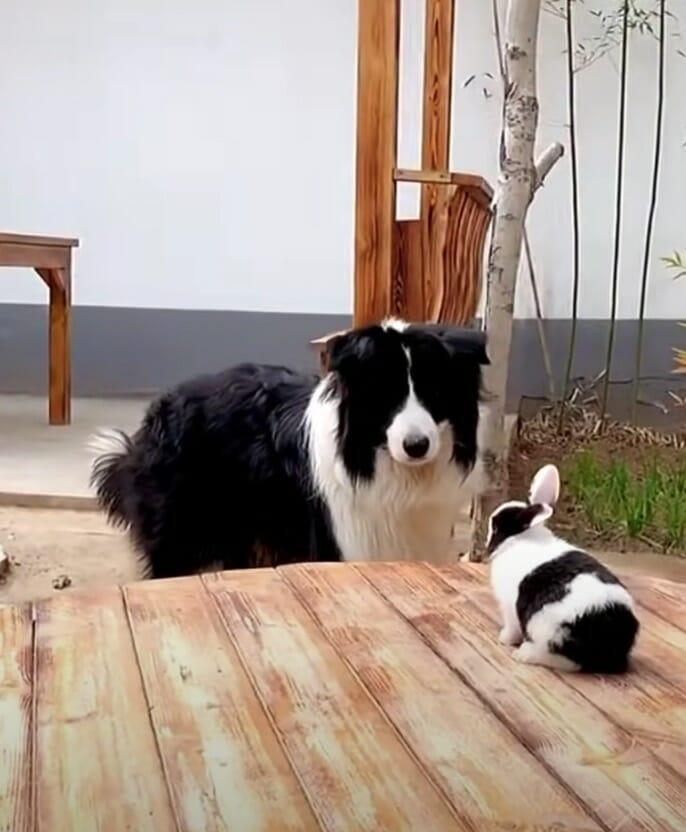 królik siedzi na stole, a pies stoi obok