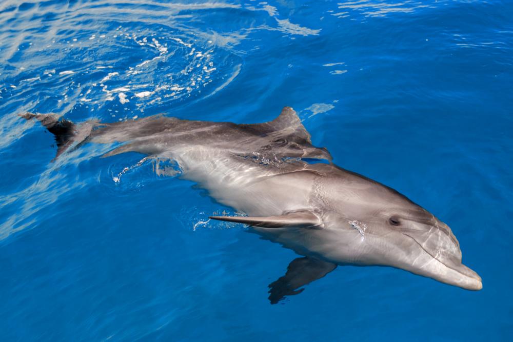 delfin w wodzie