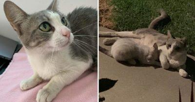 Bezdomny kot dostaje jedzenie od życzliwej rodziny - kiedy zwierzę wraca ma dla nich niespodziankę