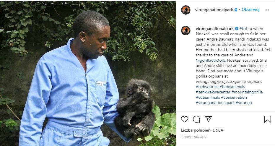 mężczyzna w niebieskiej koszuli trzyma w ręce małego goryla