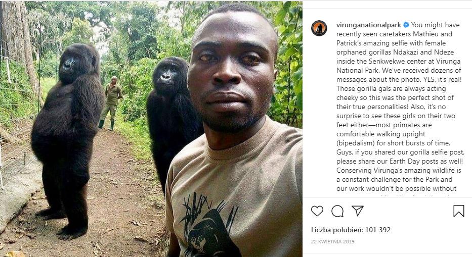 dwaj mężczyźni i dwa goryle
