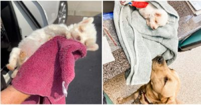 Wycieńczonego psa uratowano przed uśpieniem dzięki psim dawcom krwi