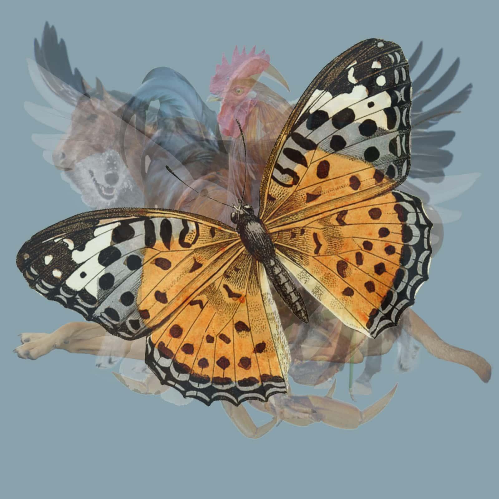 test farfalla