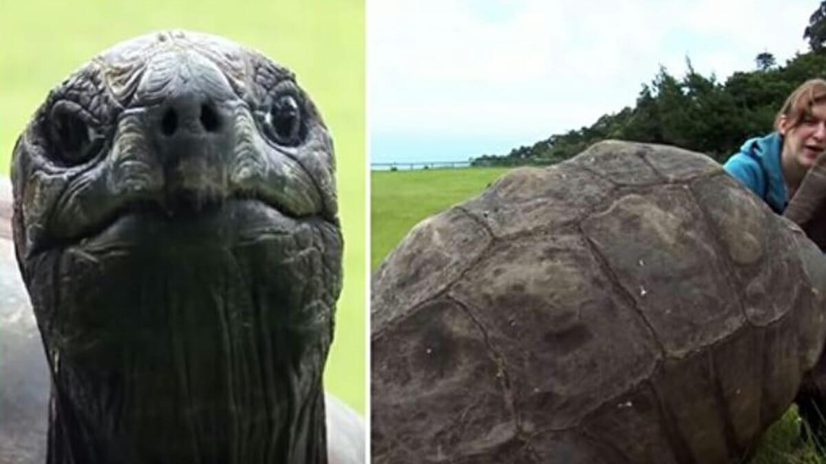 Maailman Vanhin Kilpikonna