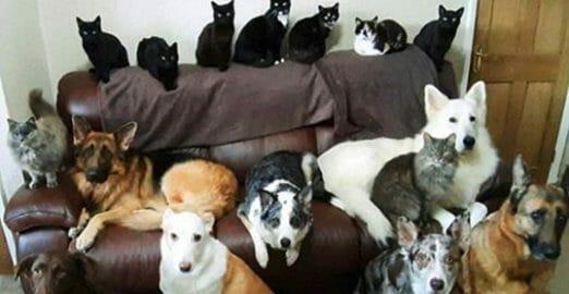 Kathy è riuscita a ottenere tutti e 17 gli animali domestici in una foto. Foto: Facebook