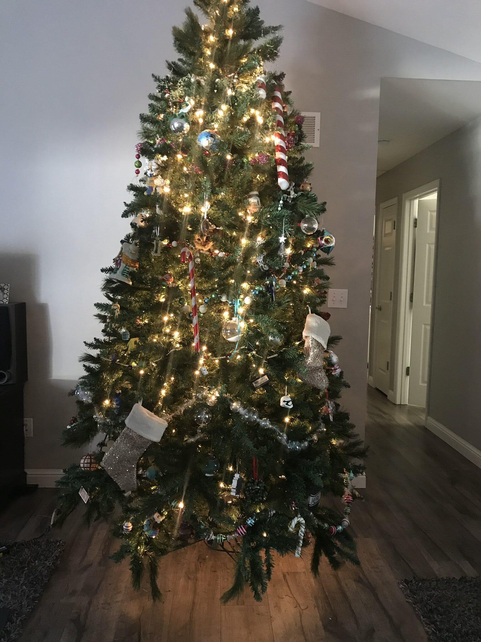 gatto nascosto nell'albero