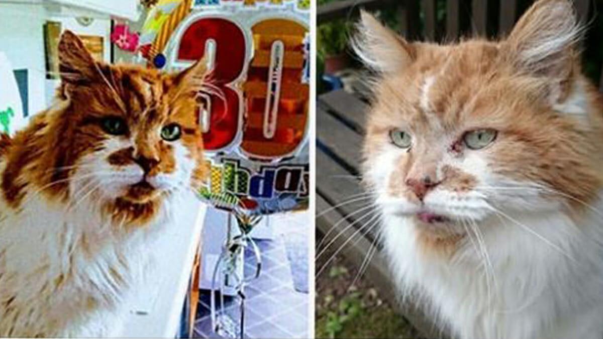 Maailman Vanhin Kissa
