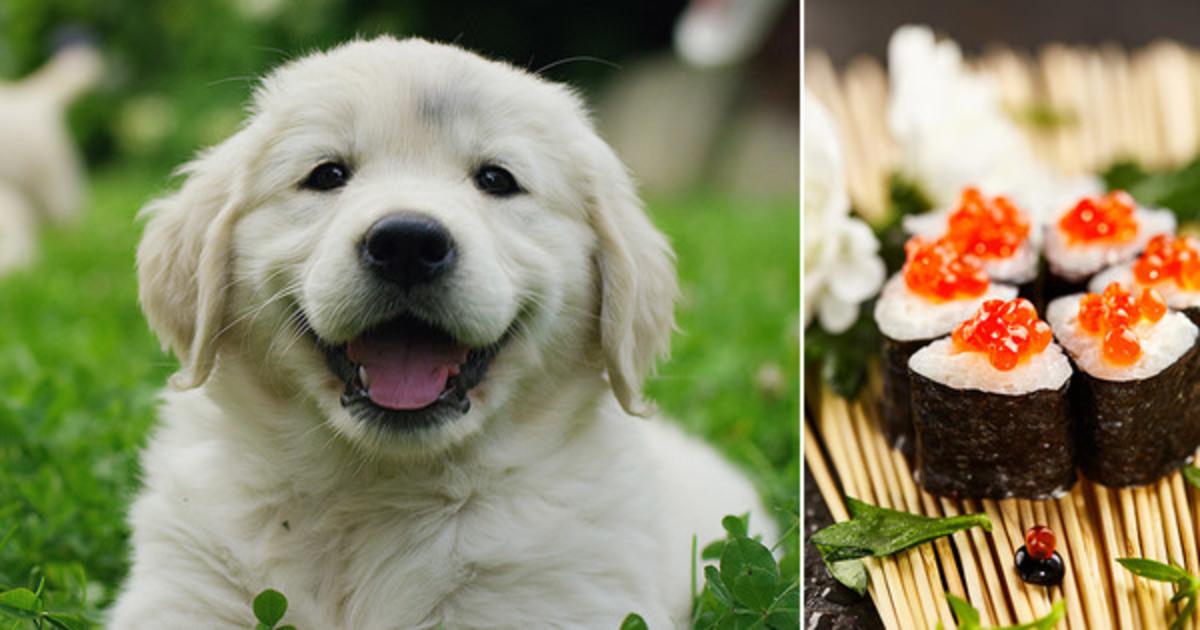 hund lugter af fisk ud af munden