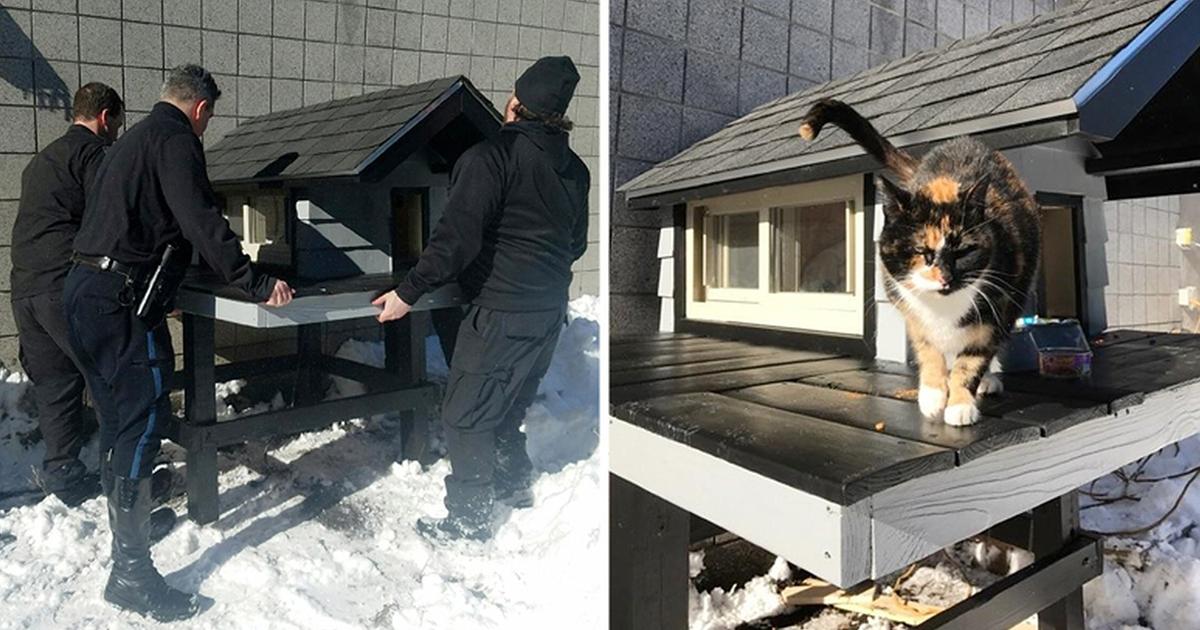 polizisten finden eine streundende katze und bauen ihr ein neues haus. Black Bedroom Furniture Sets. Home Design Ideas