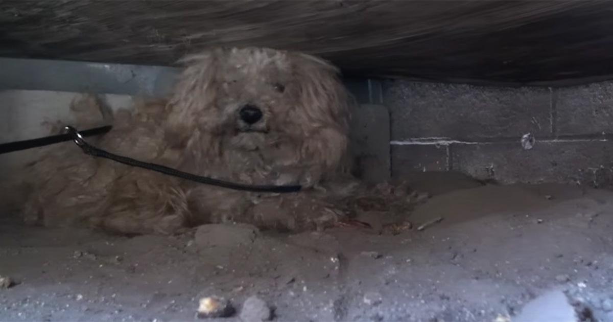 Mann Stirbt Und Hinterlässt Einen Hund Da Entdeckt Ein Fremder