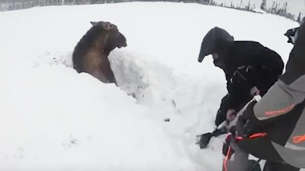 Von ihren Schneemobilen aus sehen sie etwas Schwarzes im Schnee – da bemerken sie, dass es sich bewegt