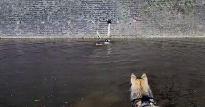 Hund Spuckt Wasser